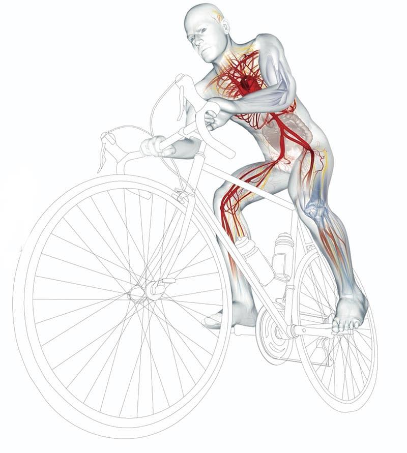 Muscle diagram on bike