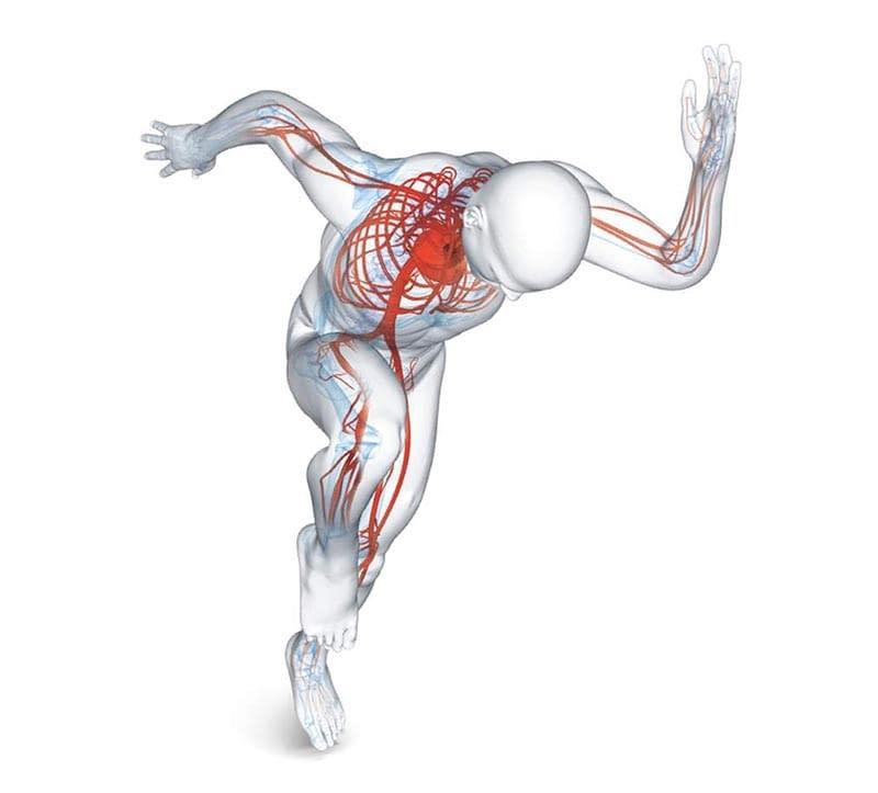 Blood circulation from Bemer