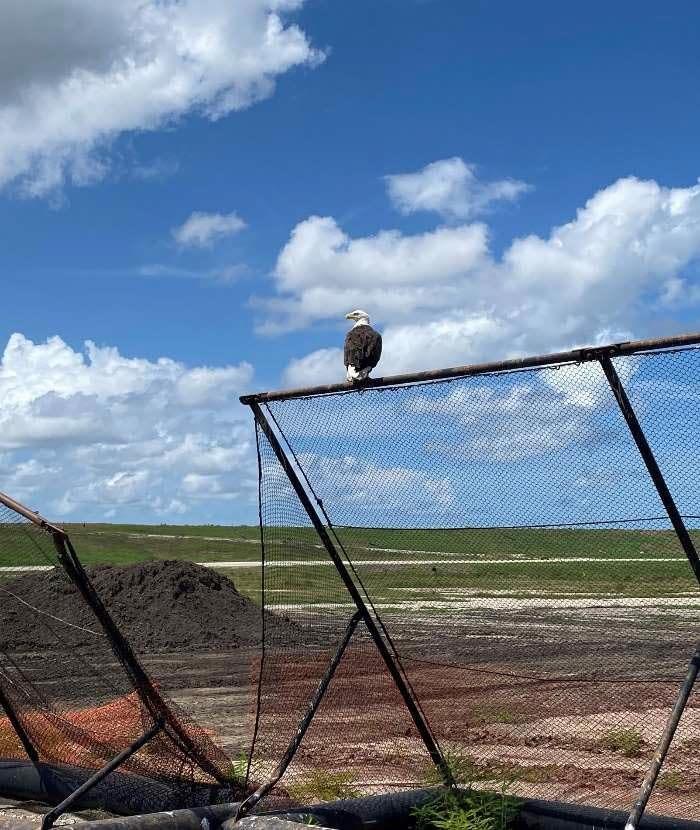 Bald eagle junk removal